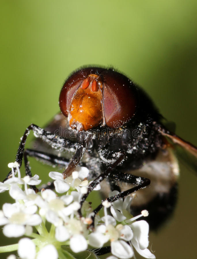 Fly on a flower stock images