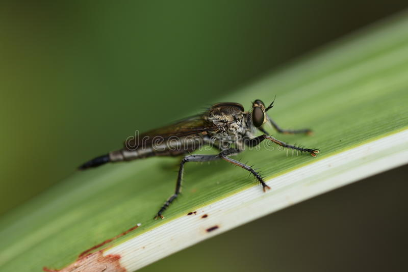 Fly in the garden. On the leaf royalty free stock photography