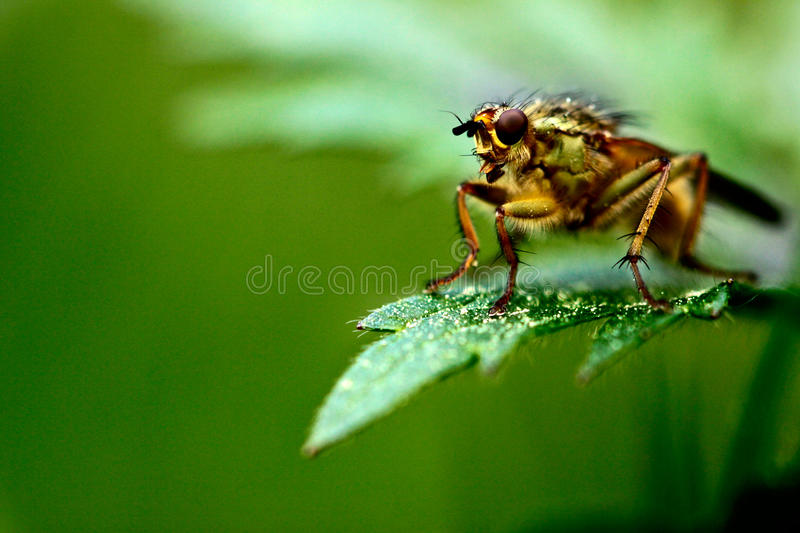 Fly On The Grass Stock Images