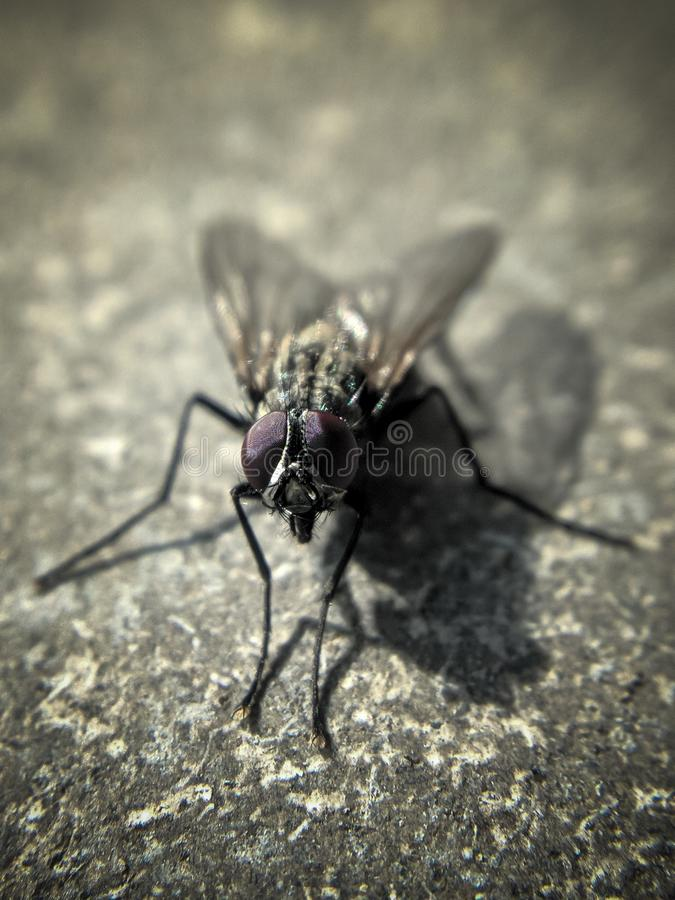 Fly on gray surface of slate stock images