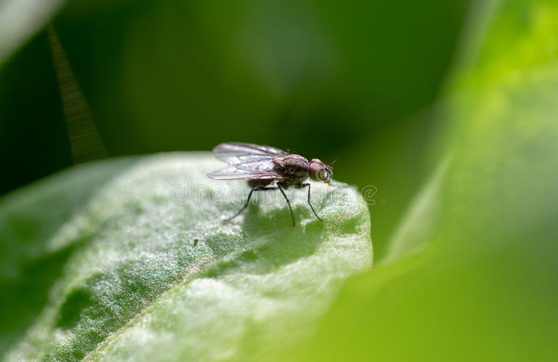 A fly on a green leaf of a plant royalty free stock photos