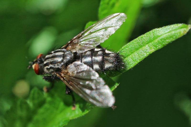 Fly on a green leaf royalty free stock images