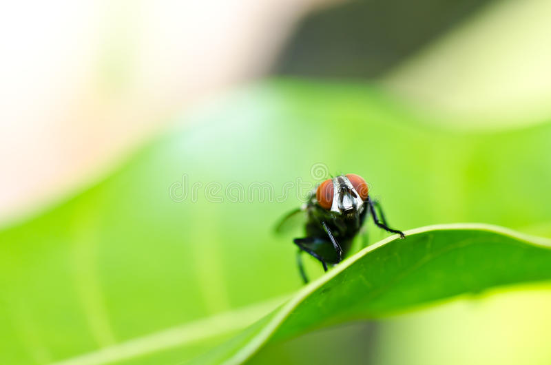 Download Fly in green nature stock image. Image of dirty, junk - 23490427