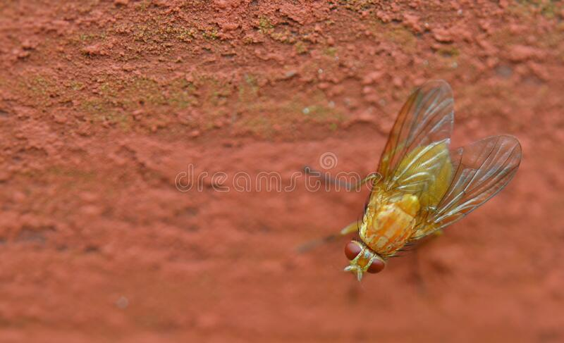 Fly on ground royalty free stock photos