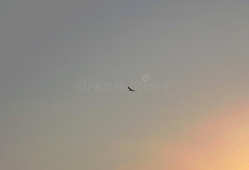Fly high in sky royalty free stock photos