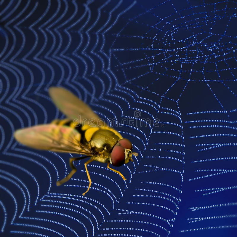 Free Fly In Spider Web Stock Images - 14670364