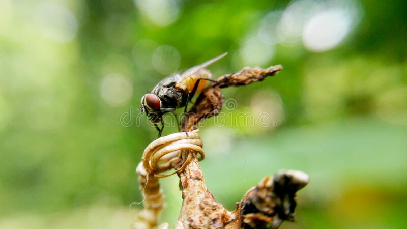 Fly Insect on Brown Plant Stem stock photography