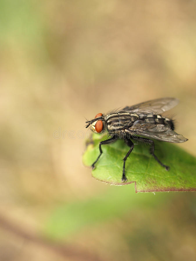 Download Fly on a leaf stock image. Image of insect, garden, leaf - 19861983
