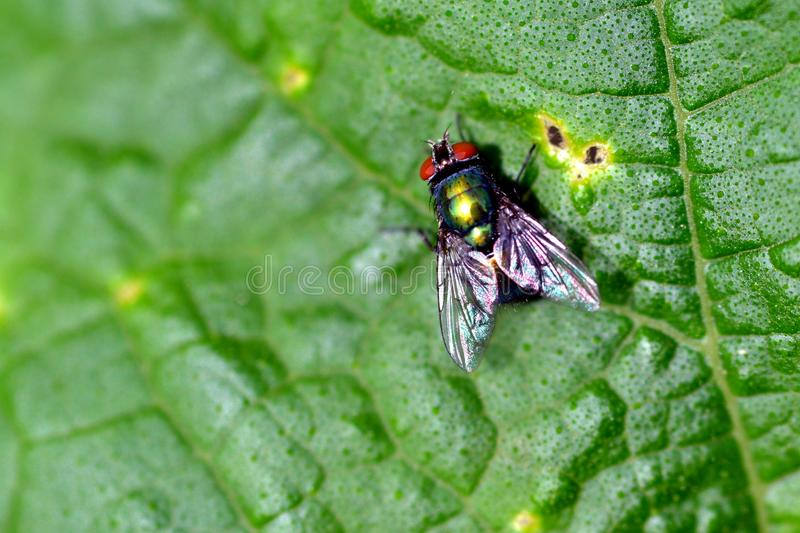 Download Fly on leaf stock image. Image of colorful, green, animal - 25123551