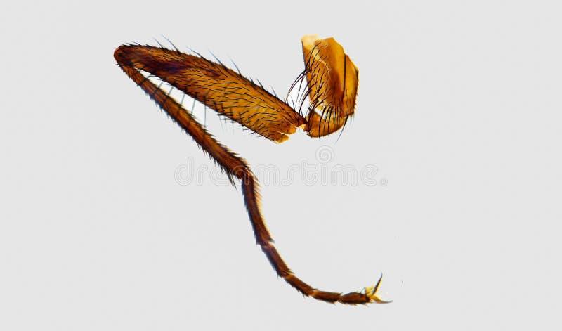 Fly Leg Under The Microscope Royalty Free Stock Photos