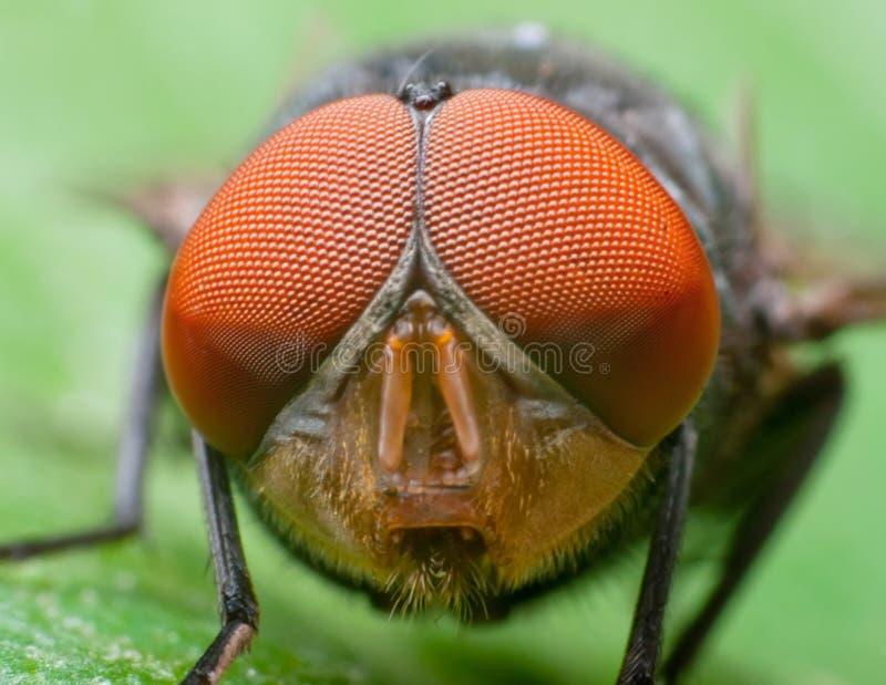 Fly macro. Macro shot of a fly's head stock image