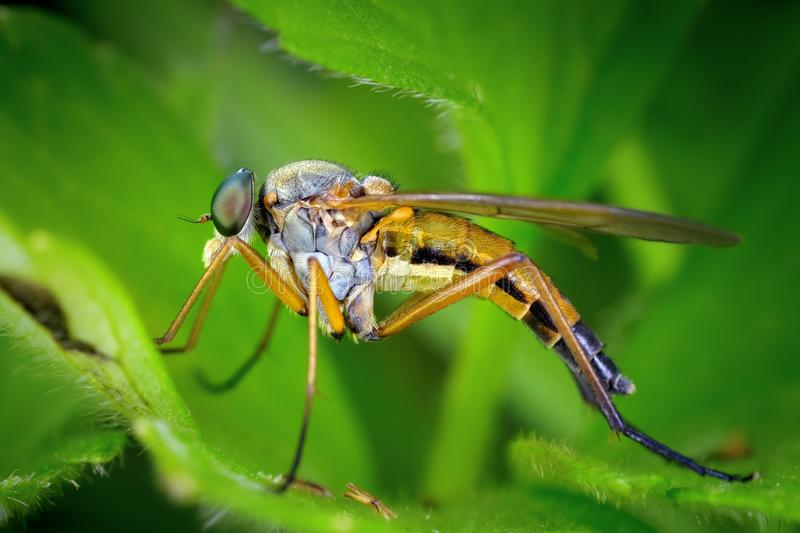 Download Fly on the meadow stock image. Image of grass, nature - 23505901
