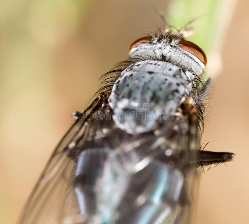 Fly in nature. super macro royalty free stock photo