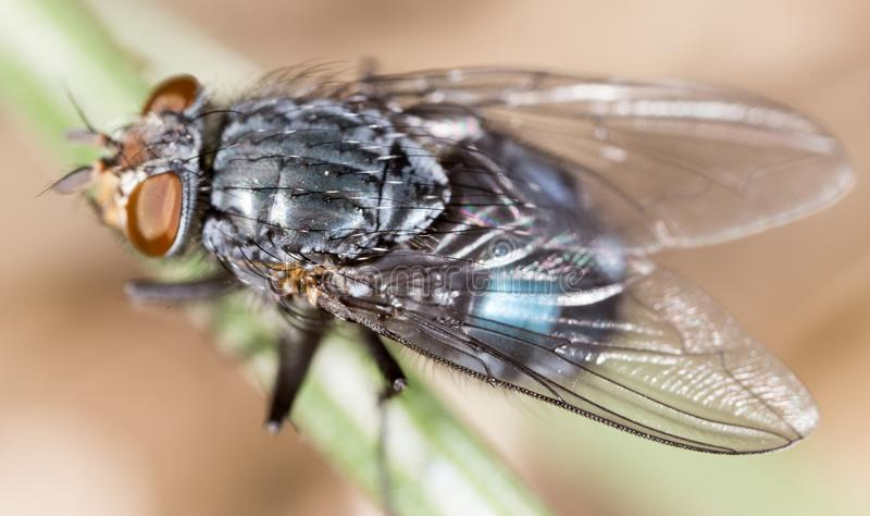 Fly in nature. super macro royalty free stock image