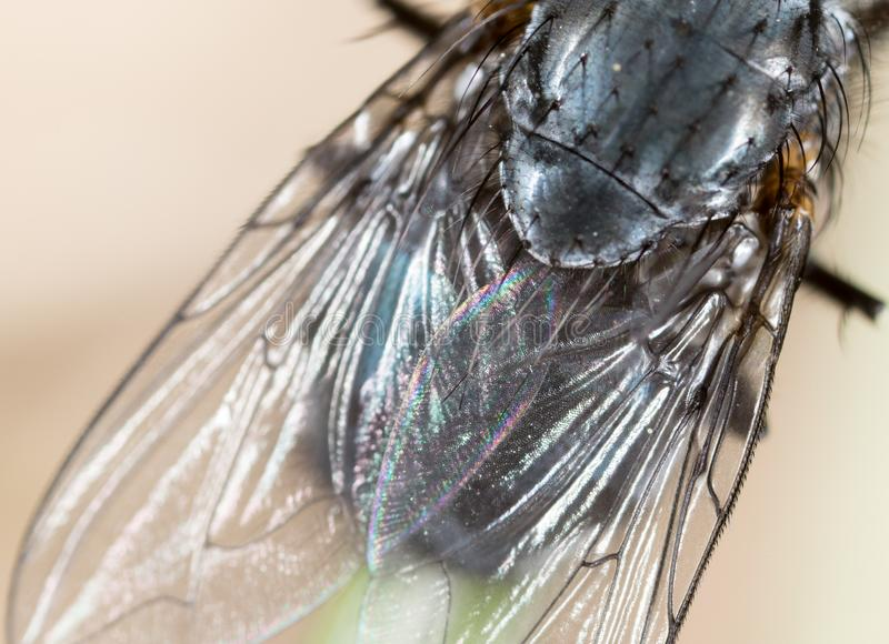 Fly in nature. super macro stock images