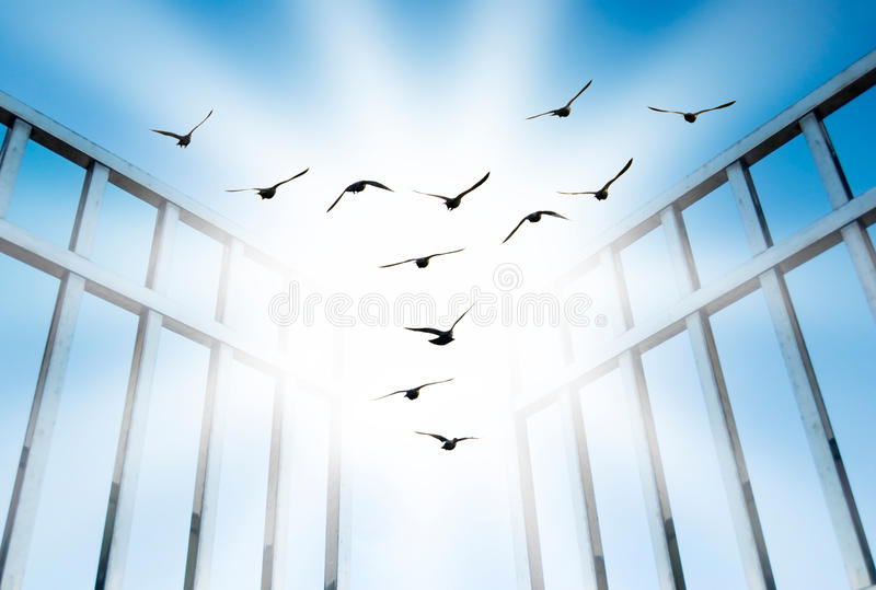 Download Fly Overcome The Difficult Gate Stock Photos - Image: 10188573