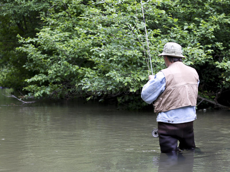 Fly rod fishing. Fisherman in waders on a trout stream with trees in the background stock image
