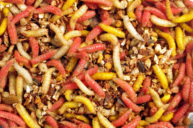 Download Fly's colourful larvae stock image. Image of long, color - 19665931