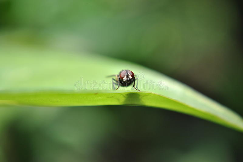 The fly take off. This image is good to insert in website or flier royalty free stock image
