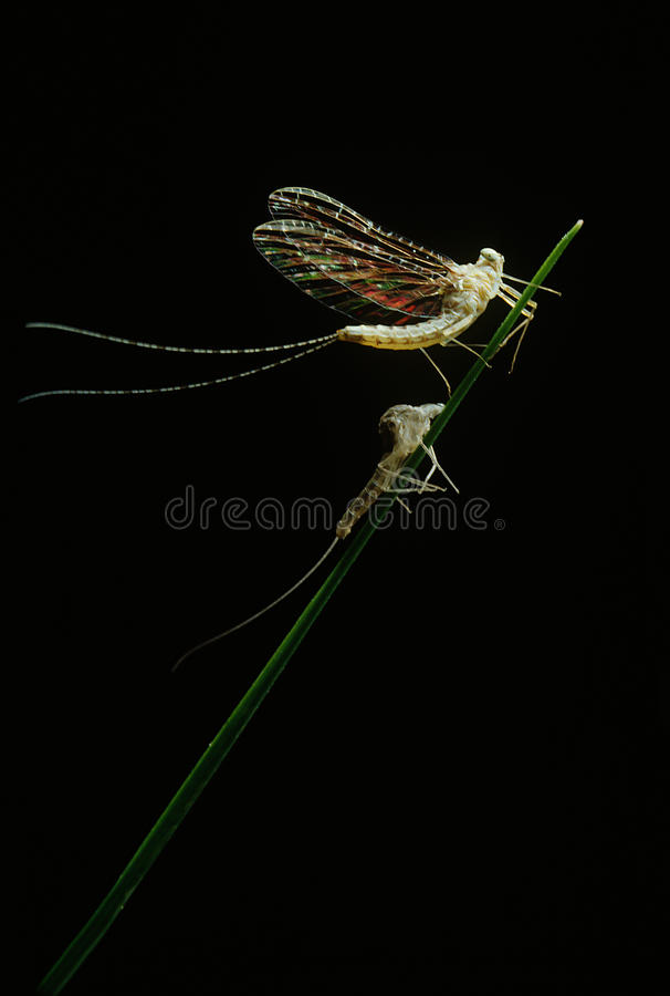 Fly In The Wind Stock Image