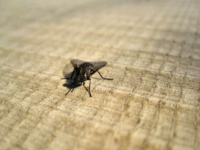 Fly on wooden background. This photo shows fly on wooden background royalty free stock photography