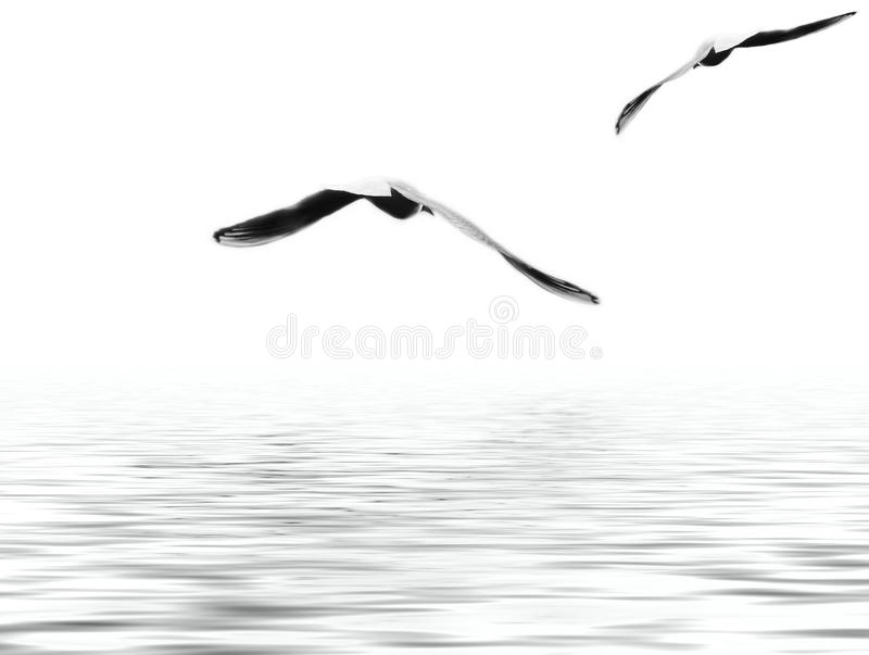 Flyby photographie stock libre de droits