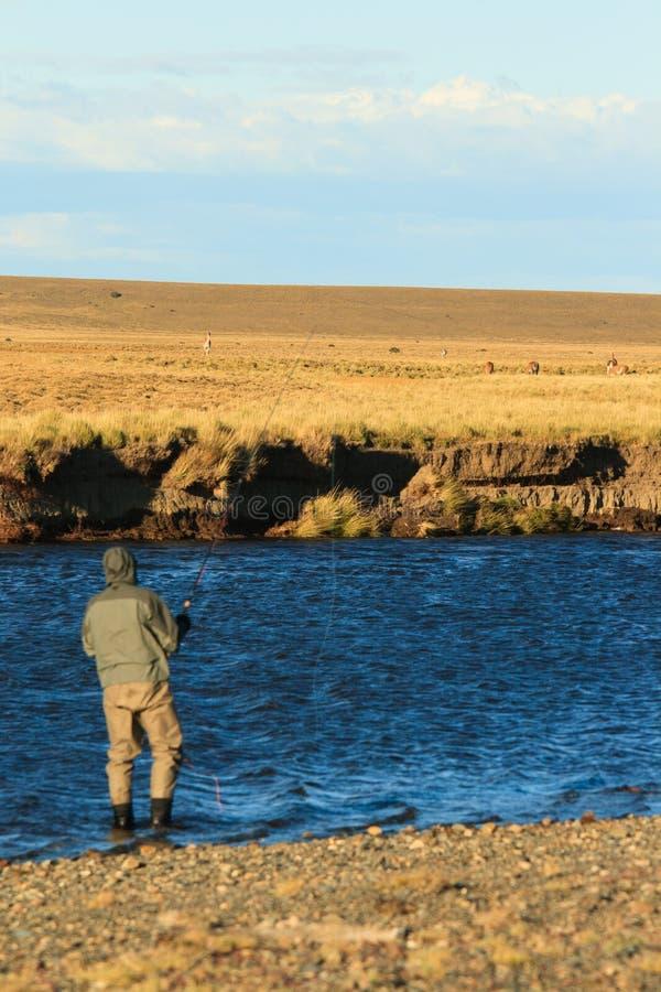 Flyfishing e guanacos foto de stock royalty free