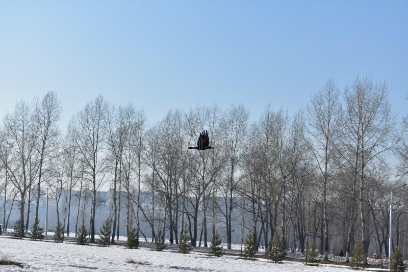 Flyg av fågeln arkivfoton