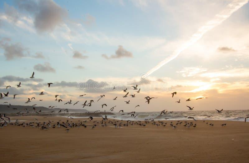 Flyg av fiskmåsar royaltyfria foton