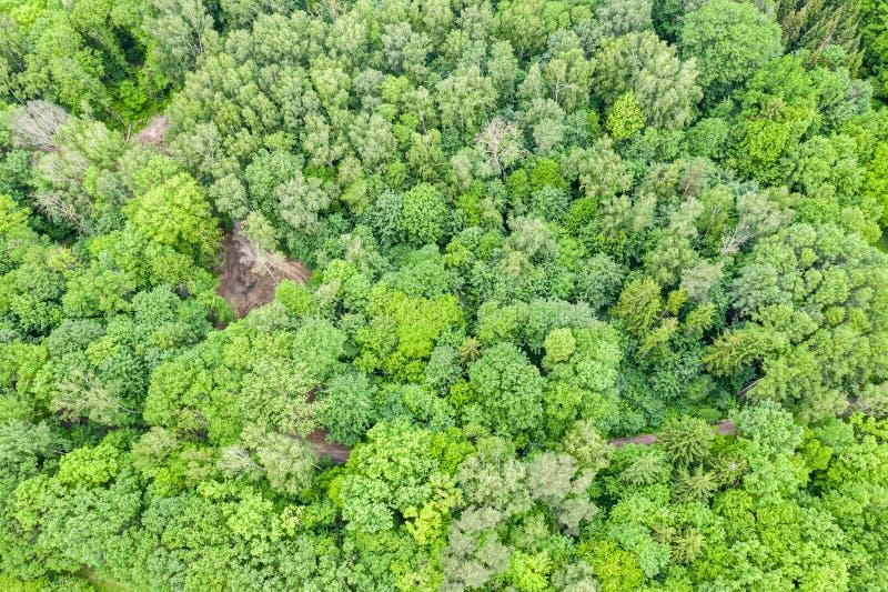 Flyg- bästa sikt av gröna lövfällande träd för sommar i skog arkivfoton