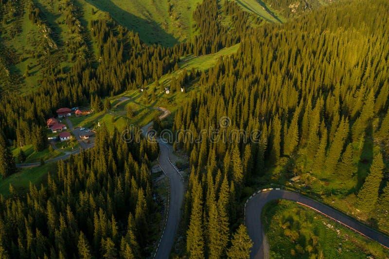 Flyg- bästa sikt av gröna träd för sommar i skog med en storartad bergflod i Kasakhstan royaltyfri bild