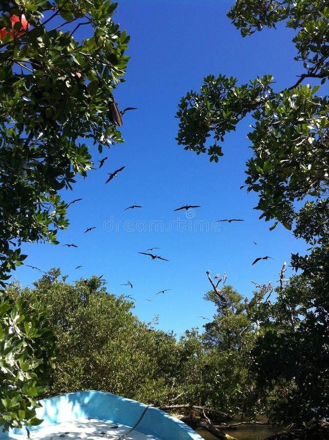 Flyg från träden royaltyfri foto