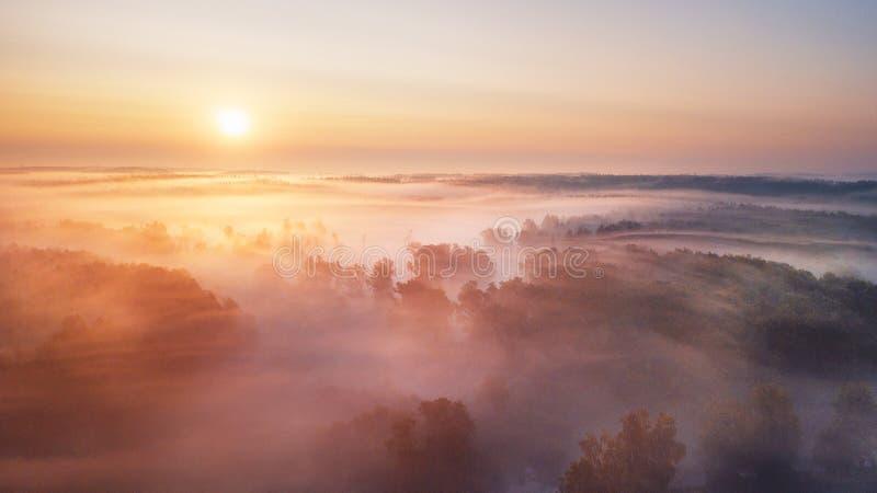 Flyg- panorama för sommarnaturlandskap Dimmig morgonflod och skog arkivbild