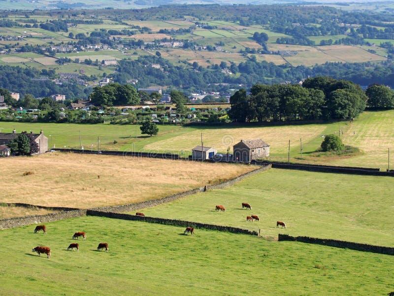 Flyg- panoramautsikt av västra - yorkshire bygd i den calder dalen nära luddenden med kor som betar i ängar och fotografering för bildbyråer