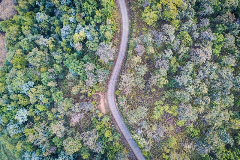 Flyg- sikt över asfaltvägar mellan skogar i berg royaltyfri foto