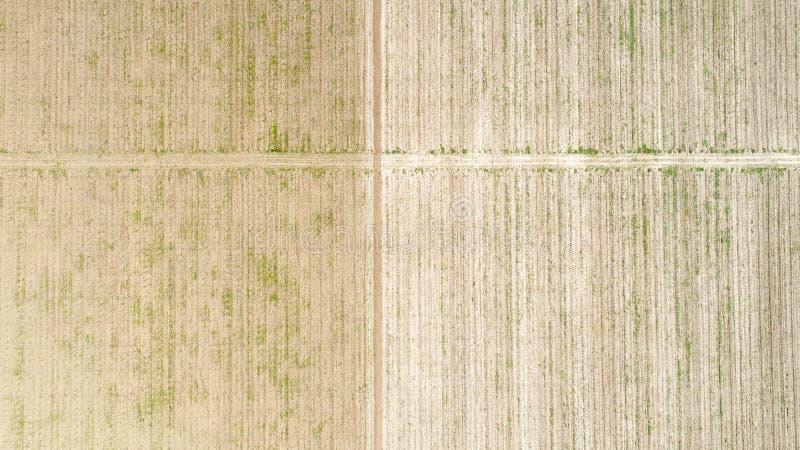 Flyg- sikt över fältet av skörden som är för tidigt arkivfoton