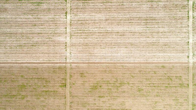 Flyg- sikt över fältet av skörden som är för tidigt arkivbilder