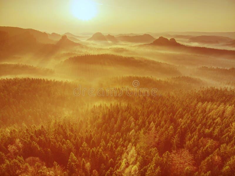 Flyg- sikt av att förbluffa dimmigt skoglandskap royaltyfri bild