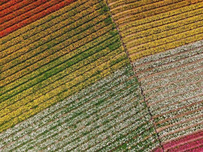 Flyg- sikt av Carlsbad blommafält royaltyfria bilder