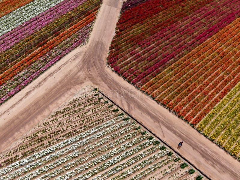 Flyg- sikt av Carlsbad blommafält arkivfoto