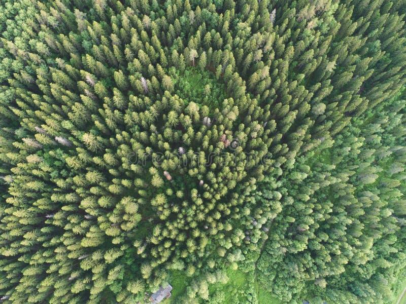 Flyg- sikt av den gröna boreala skogen som fylls med prydliga träd arkivbilder