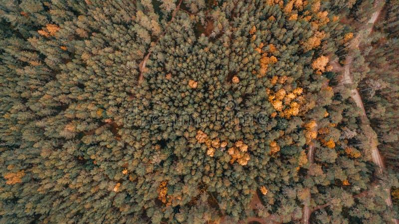 Flyg- sikt av den tjocka skogen i höst med vägklipp igenom royaltyfria foton