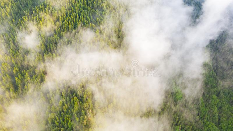 Flyg- sikt av den tropiska rainforesten som täckas av molnet och dimma arkivfoto