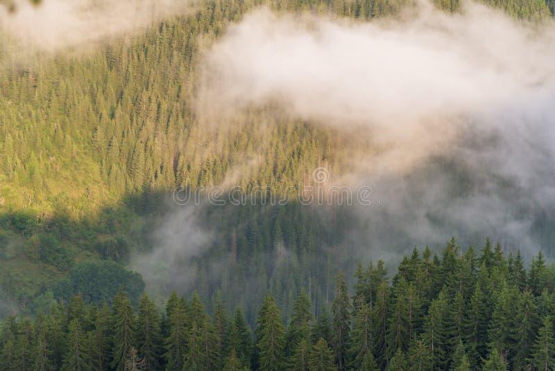 Flyg- sikt av den tropiska rainforesten som täckas av molnet och dimma royaltyfri bild