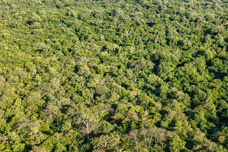 Flyg- sikt av den tropiska skogen royaltyfria bilder