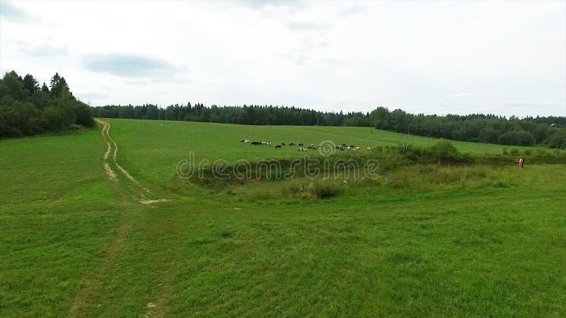 Flyg- sikt av det gröna fältet och sjön Flyga över fältet med grönt gräs och den lilla sjön Flyg- granskning av skogen nära arkivbild