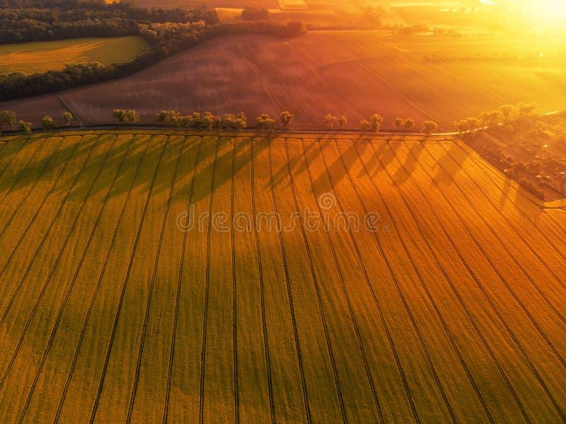 Flyg- sikt av det gula canolafältet och den avlägsna landsvägen arkivbilder
