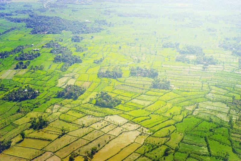 Flyg- sikt av det härliga gröna risfältfältet på Lombok, Indonesien royaltyfri bild