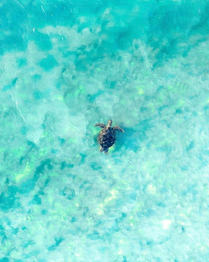 Flyg- sikt av en havssköldpadda som simmar till och med det blåa havet och vågen arkivbilder
