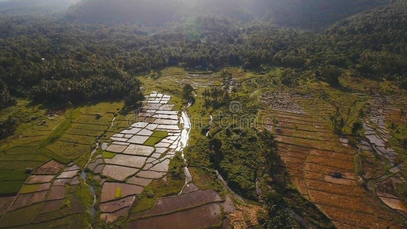 Flyg- sikt av en risfält philippines royaltyfria foton